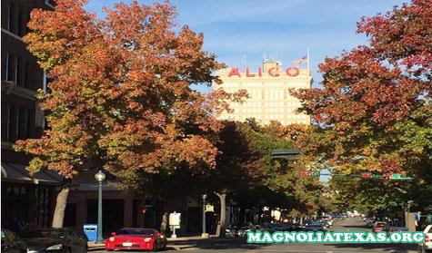 10 Hal Yang Harus Dilakukan Di Waco Selain Mengunjungi Pasar Magnolia