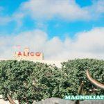 7 Tempat Wisata di Waco Texas Selain Pasar Magnolia